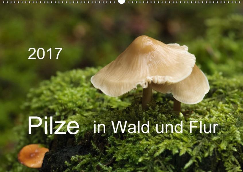 Pilze in Wald und Flur (Wandkalender 2017 DIN A2 quer) - Coverbild