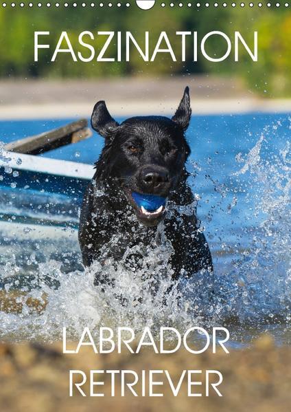 Faszination Labrador Retriever (Wandkalender 2017 DIN A3 hoch) - Coverbild