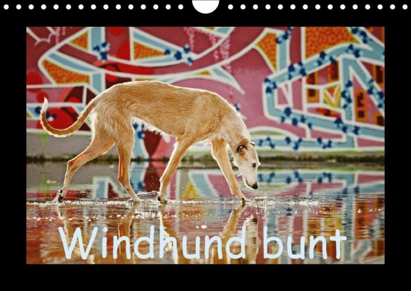Windhund bunt (Wandkalender 2017 DIN A4 quer) - Coverbild