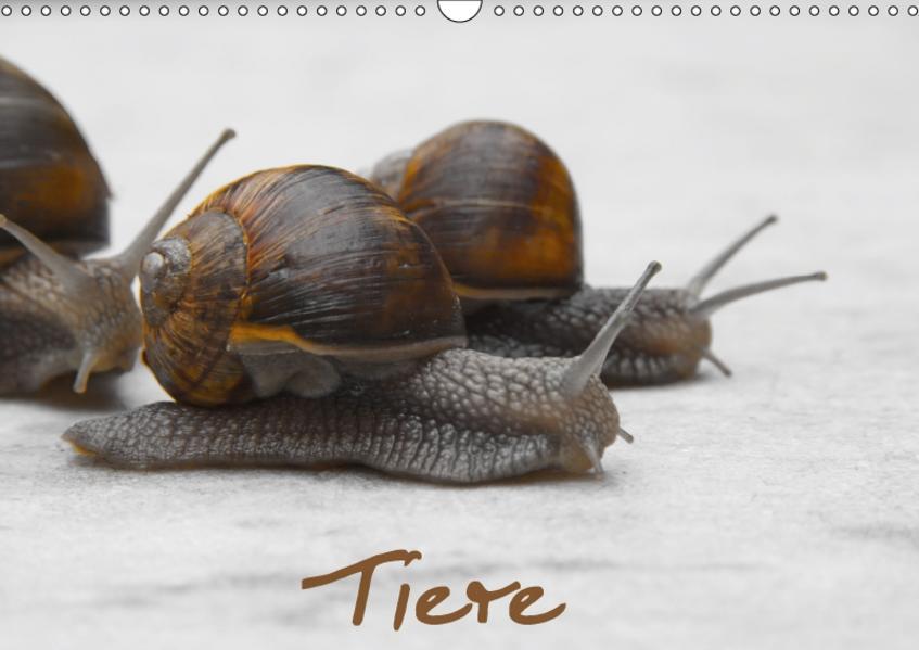 Tiere (Wandkalender 2017 DIN A3 quer) - Coverbild