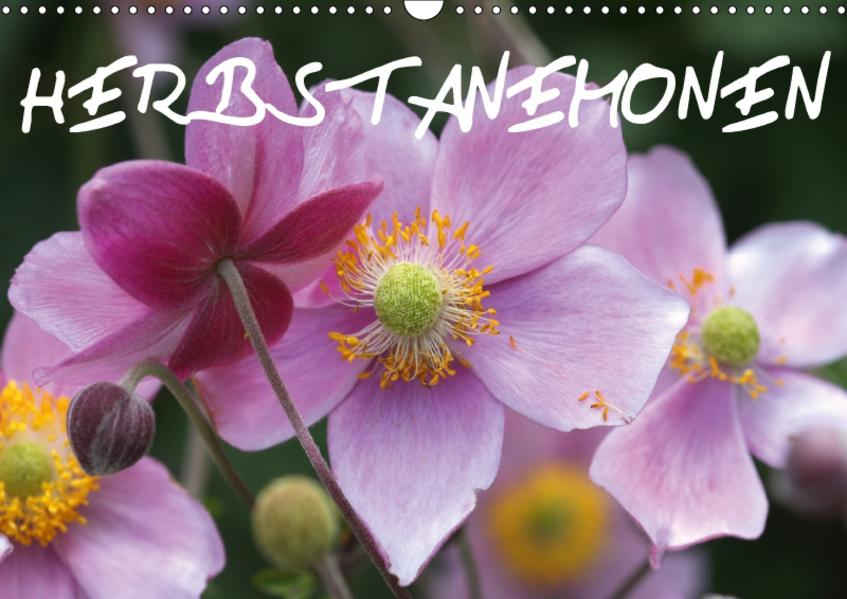 Herbstanemonen (Wandkalender 2017 DIN A3 quer) - Coverbild
