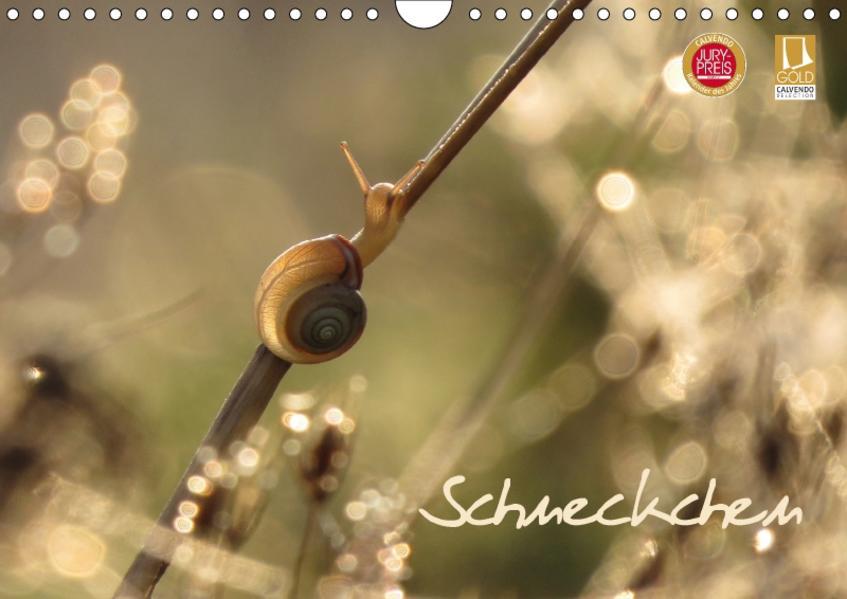 Schneckchen (Wandkalender 2017 DIN A4 quer) - Coverbild