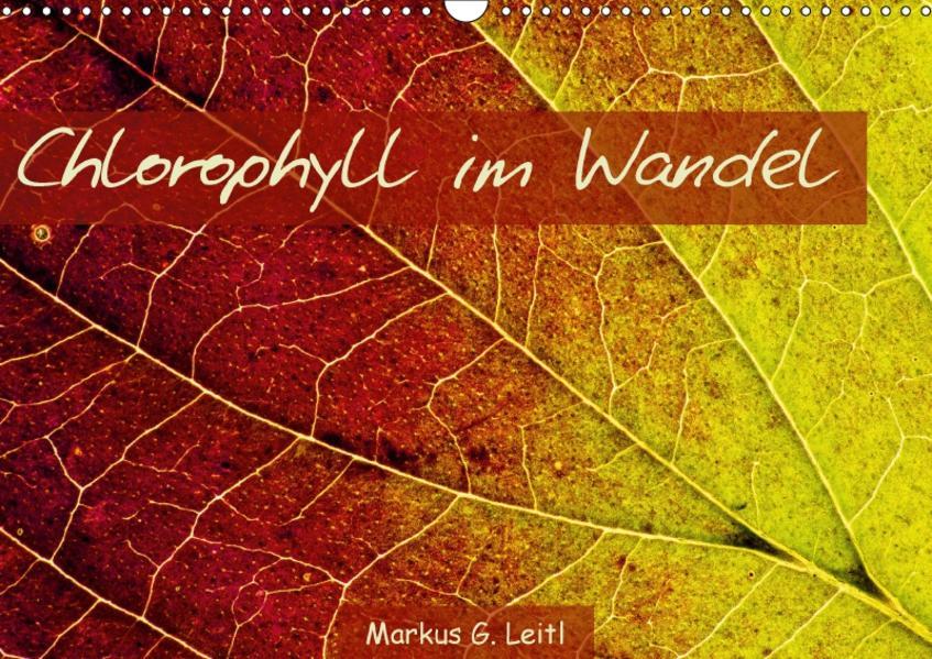 Chlorophyll im Wandel (Wandkalender 2017 DIN A3 quer) - Coverbild