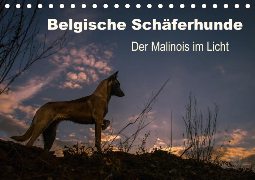 Belgische Schäferhunde - Der Malinois im Licht (Tischkalender 2017 DIN A5 quer) - Coverbild