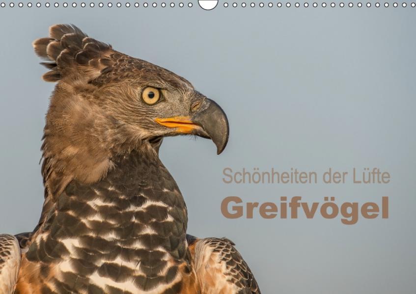 Schönheiten der Lüfte - Greifvögel (Wandkalender 2017 DIN A3 quer) - Coverbild