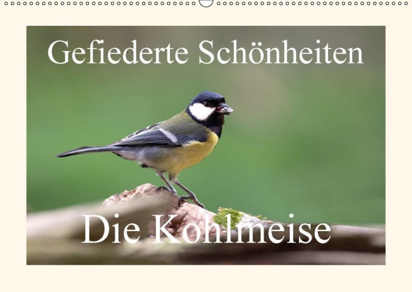 Gefiederte Schönheiten - Die Kohlmeise (Wandkalender 2017 DIN A2 quer) - Coverbild