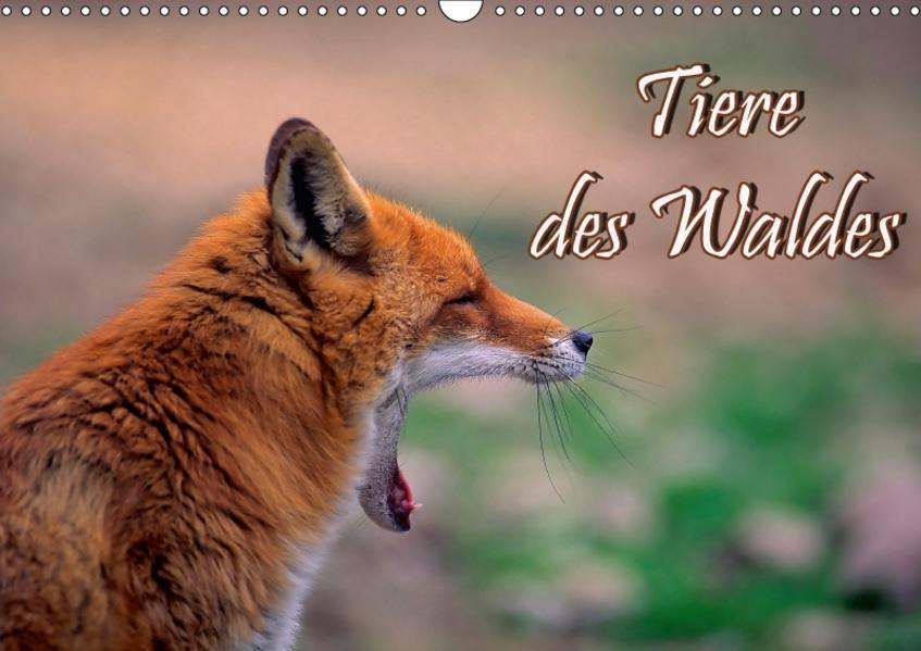 Tiere des Waldes (Wandkalender 2017 DIN A3 quer) - Coverbild