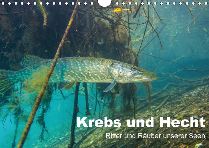 Krebs und Hecht - Ritter und Räuber unserer Seen (Wandkalender 2017 DIN A4 quer) - Coverbild