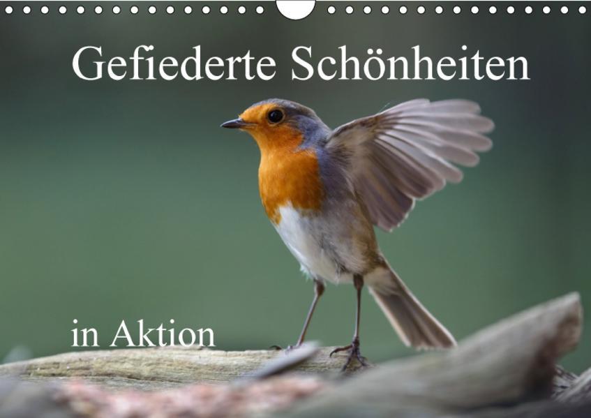 Gefiederte Schönheiten in Aktion (Wandkalender 2017 DIN A4 quer) - Coverbild