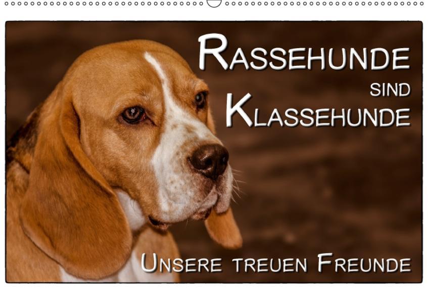 Rassehunde sind Klassehunde (Wandkalender 2017 DIN A2 quer) - Coverbild