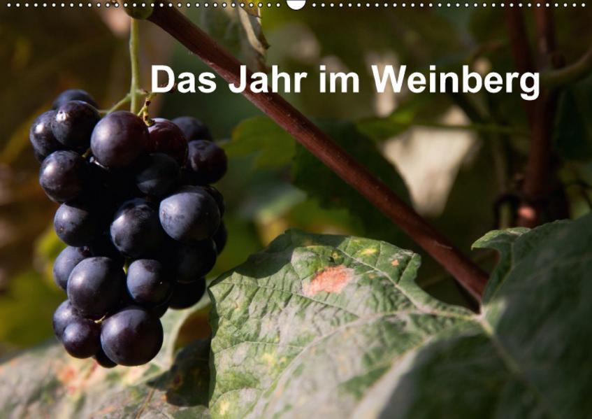 Das Jahr im Weinberg (Wandkalender 2017 DIN A2 quer) - Coverbild