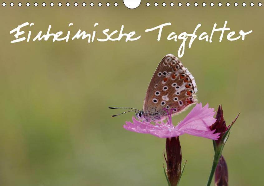 Einheimische Tagfalter (Wandkalender 2017 DIN A4 quer) - Coverbild