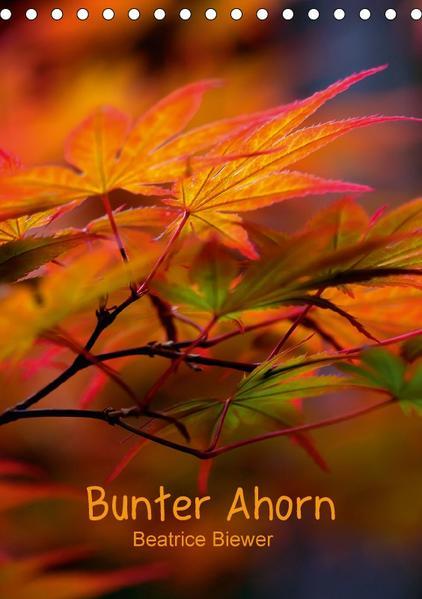 Bunter Ahorn (Tischkalender 2017 DIN A5 hoch) - Coverbild