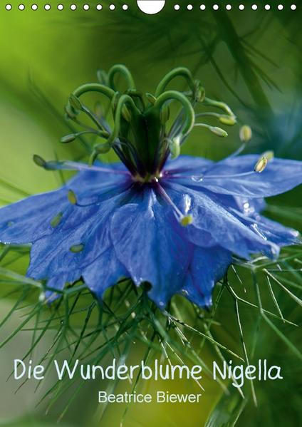 Die Wunderblume Nigella (Wandkalender 2017 DIN A4 hoch) - Coverbild