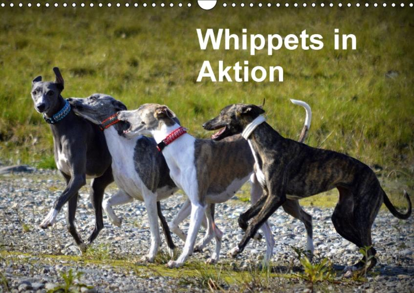 Whippets in AktionAT-Version  (Wandkalender 2017 DIN A3 quer) - Coverbild