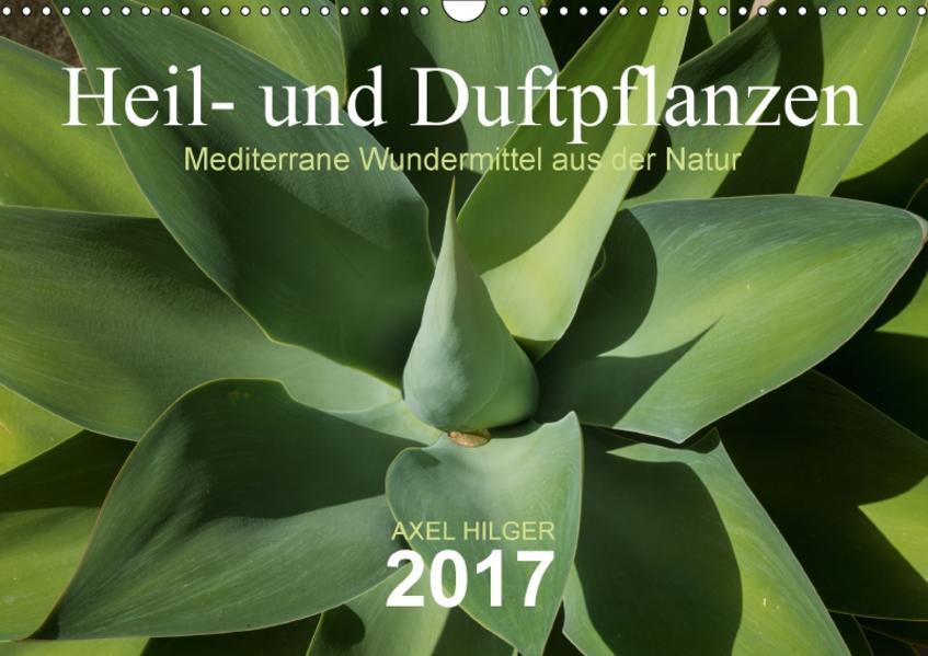 Heil- und Duftpflanzen (Wandkalender 2017 DIN A3 quer) - Coverbild