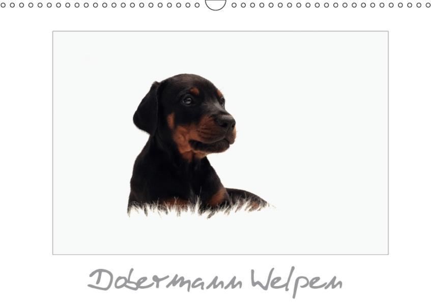 Dobermann Welpen (Wandkalender 2017 DIN A3 quer) - Coverbild