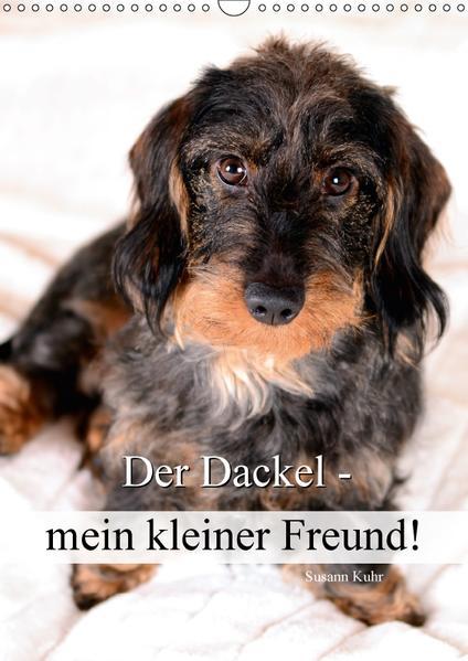 Der Dackel - mein kleiner Freund (Wandkalender 2017 DIN A3 hoch) - Coverbild