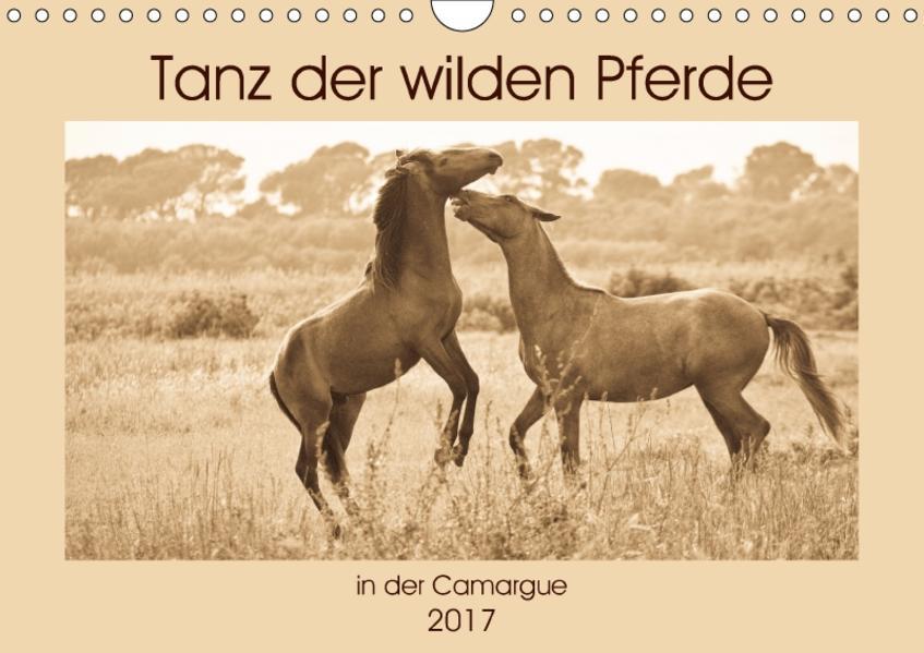 Tanz der wilden Pferde in der Camargue (Wandkalender 2017 DIN A4 quer) - Coverbild