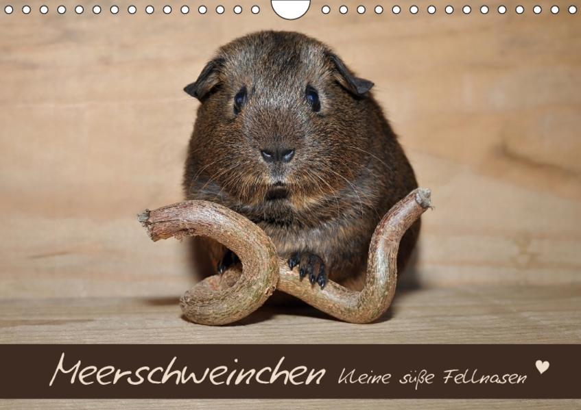 Meerschweinchen - Kleine süße Fellnasen (Wandkalender 2017 DIN A4 quer) - Coverbild