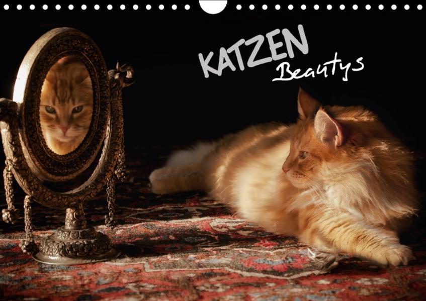 KATZEN Beautys (Wandkalender 2017 DIN A4 quer) - Coverbild