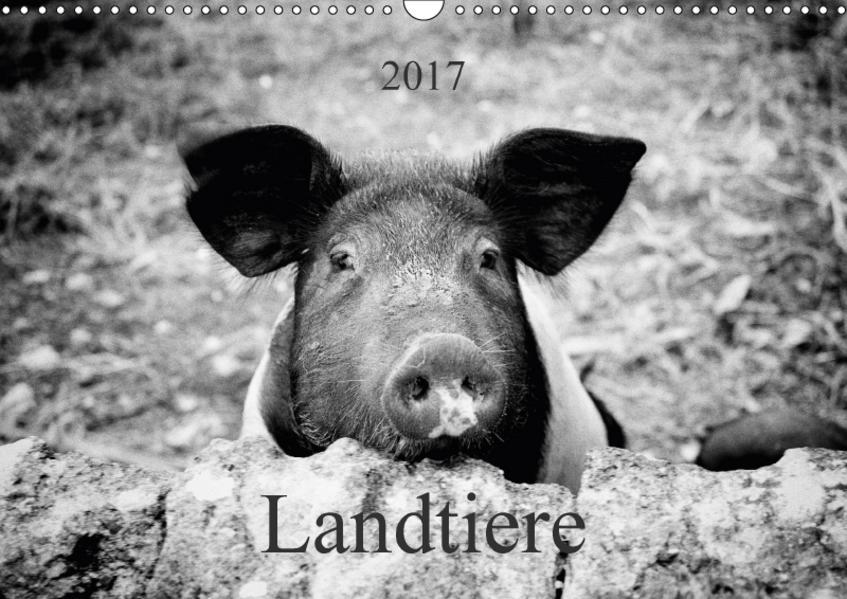 Landtiere (Wandkalender 2017 DIN A3 quer) - Coverbild