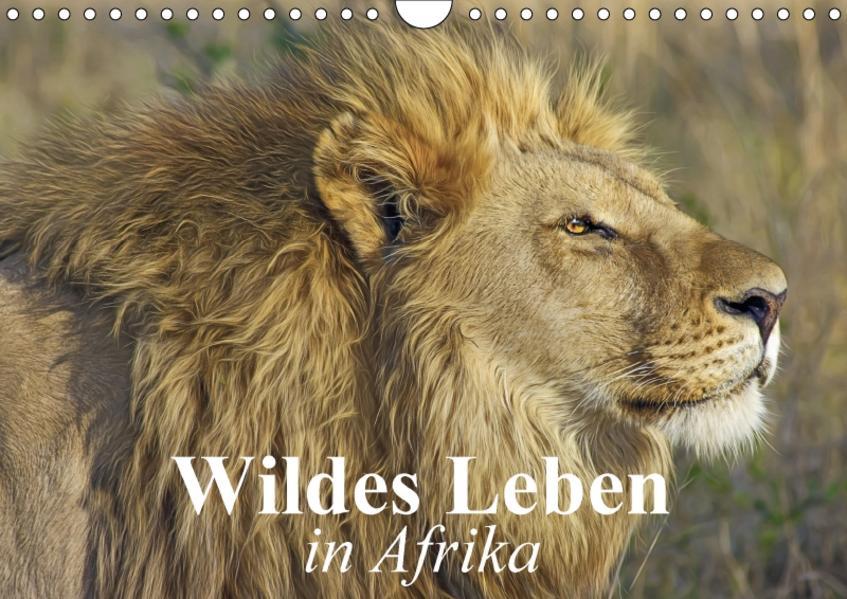 Wildes Leben in Afrika (Wandkalender 2017 DIN A4 quer) - Coverbild