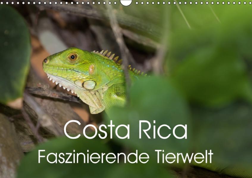 Costa Rica. Faszinierende Tierwelt (Wandkalender 2017 DIN A3 quer) - Coverbild