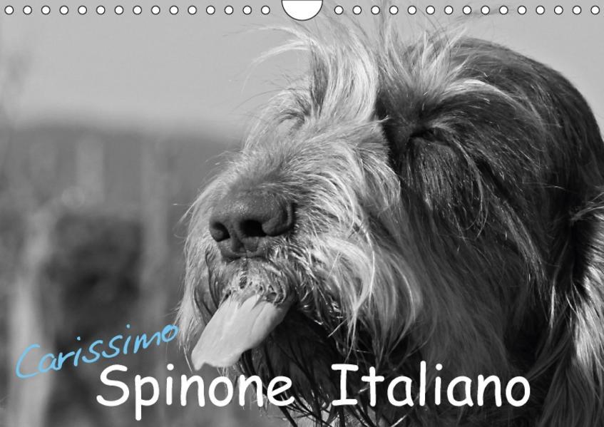 Carissimo Spinone Italiano (Wandkalender 2017 DIN A4 quer) - Coverbild