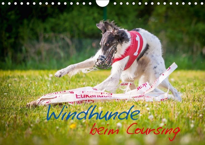 Windhunde beim Coursing (Wandkalender 2017 DIN A4 quer) - Coverbild