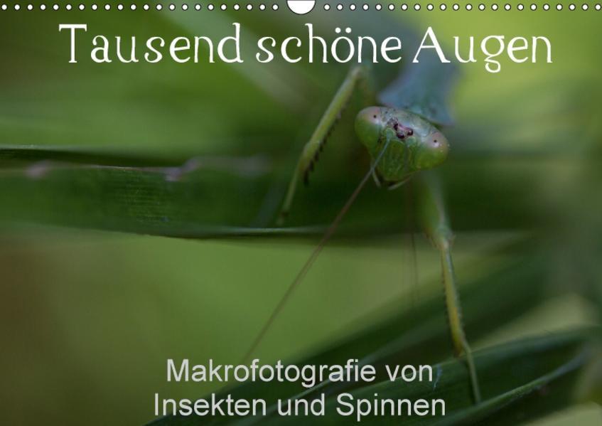 Tausend schöne Augen (Wandkalender 2017 DIN A3 quer) - Coverbild