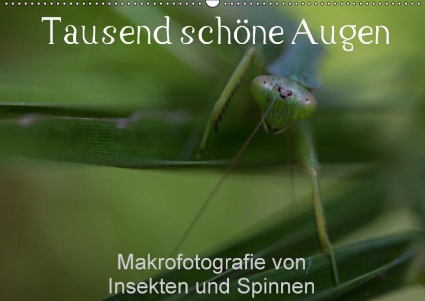 Tausend schöne Augen (Wandkalender 2017 DIN A2 quer) - Coverbild
