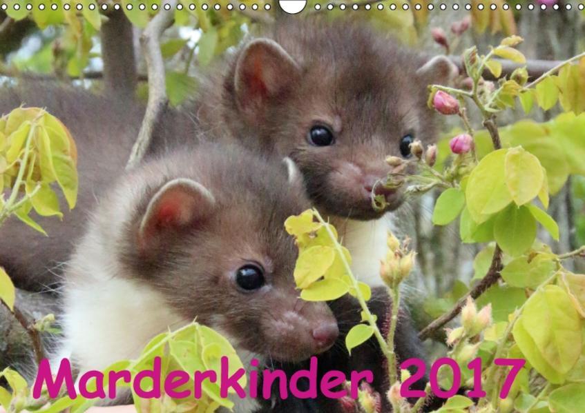 Marderkinder (Wandkalender 2017 DIN A3 quer) - Coverbild