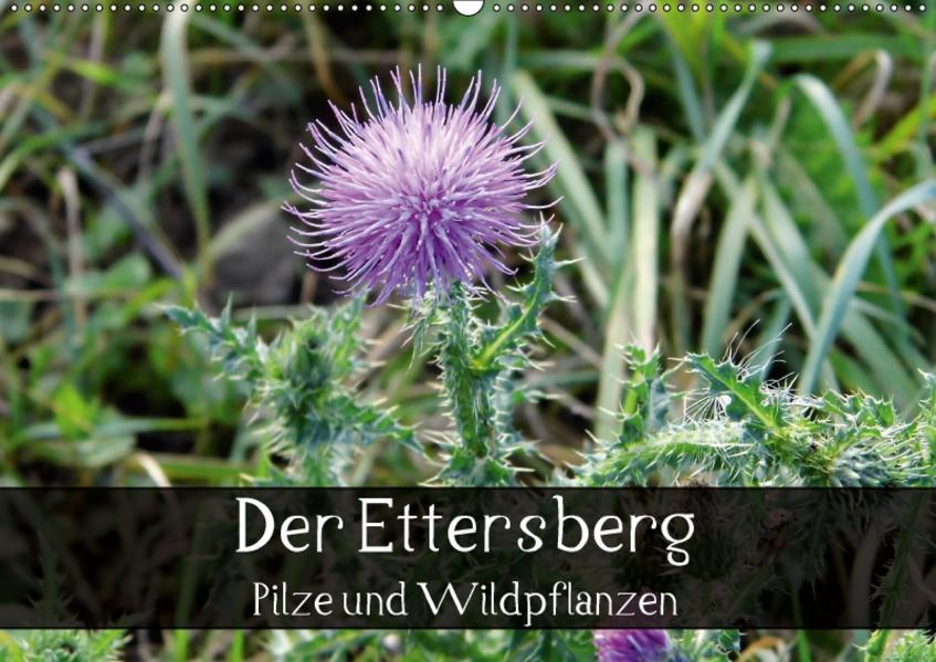 Der Ettersberg - Pilze und Wildpflanzen (Wandkalender 2017 DIN A2 quer) - Coverbild