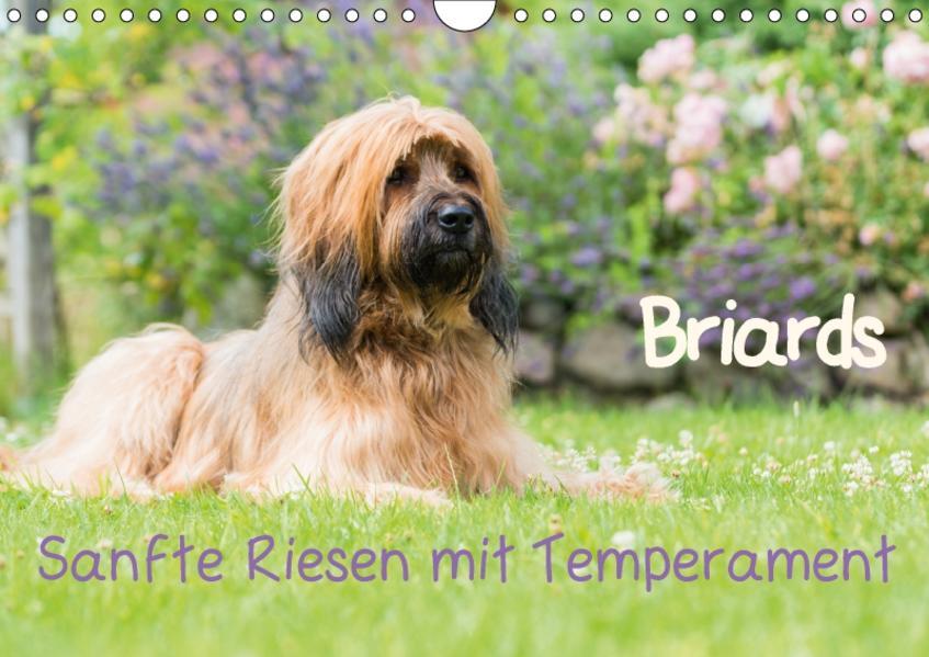 Briards - sanfte Riesen mit Temperament (Wandkalender 2017 DIN A4 quer) - Coverbild