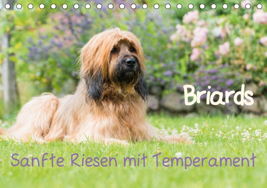 Briards - sanfte Riesen mit Temperament (Tischkalender 2017 DIN A5 quer) - Coverbild