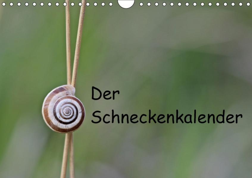 Der Schneckenkalender (Wandkalender 2017 DIN A4 quer) - Coverbild