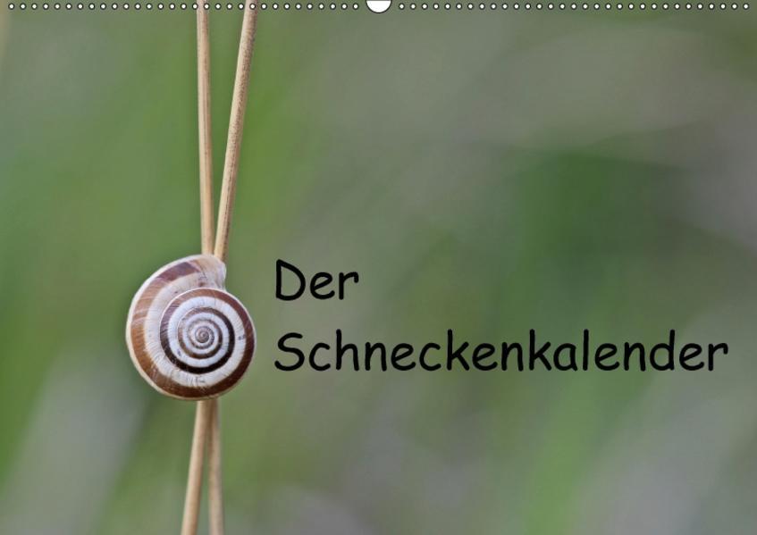 Der Schneckenkalender (Wandkalender 2017 DIN A2 quer) - Coverbild