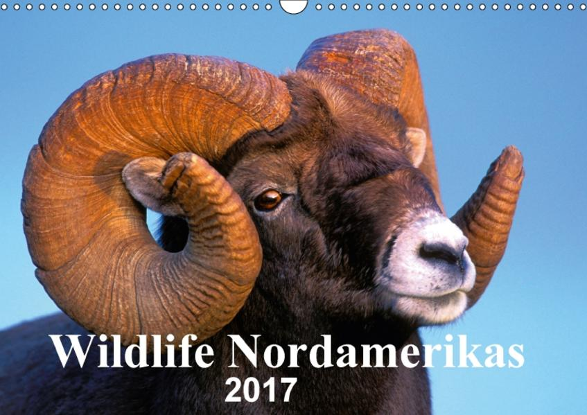 Wildlife Nordamerikas 2017 (Wandkalender 2017 DIN A3 quer) - Coverbild