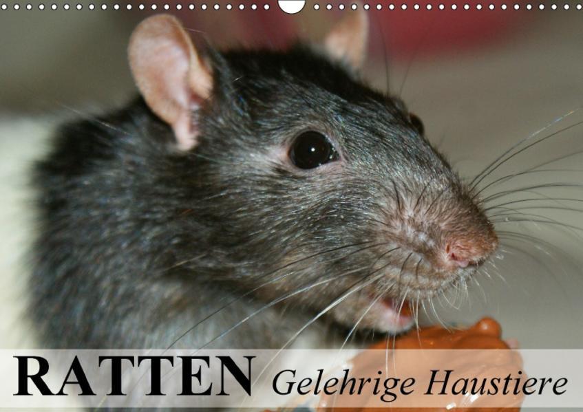Ratten - Gelehrige Haustiere (Wandkalender 2017 DIN A3 quer) - Coverbild