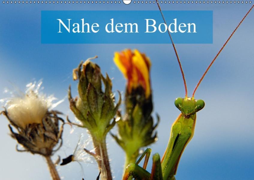 Nahe dem BodenAT-Version  (Wandkalender 2017 DIN A2 quer) - Coverbild
