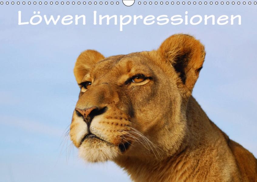 Löwen Impressionen (Wandkalender 2017 DIN A3 quer) - Coverbild