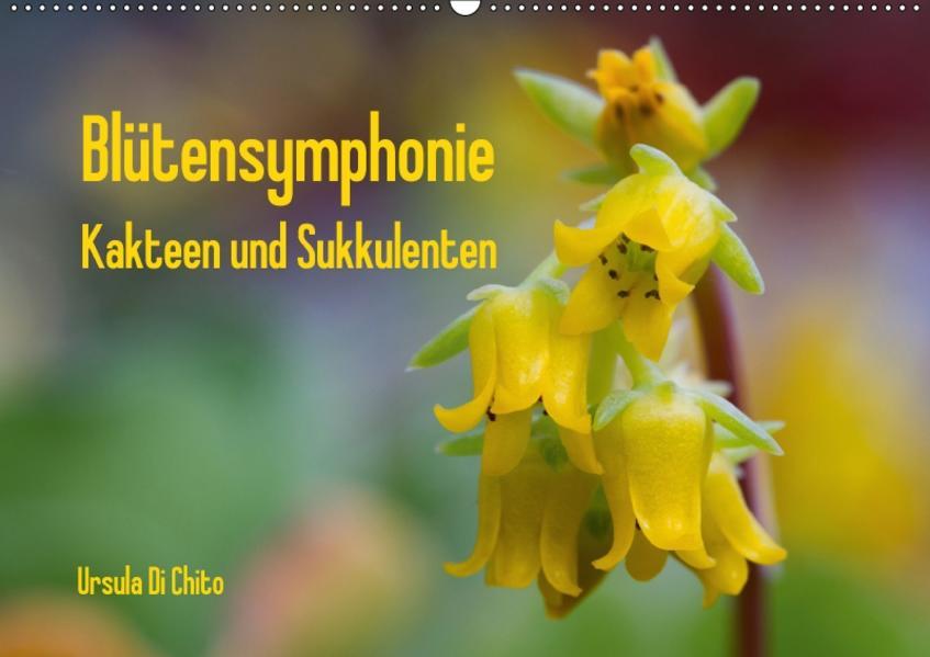 Blütensymphonie - Kakteen und Sukkulenten (Wandkalender 2017 DIN A2 quer) - Coverbild
