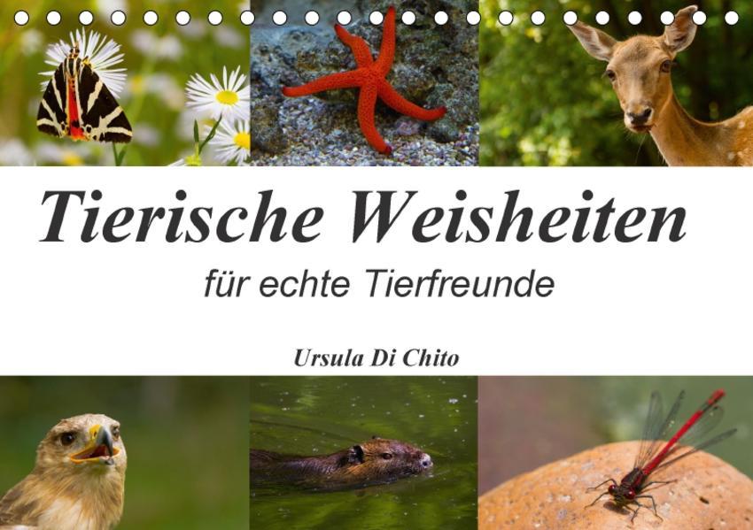 Tierische Weisheiten (Tischkalender 2017 DIN A5 quer) - Coverbild