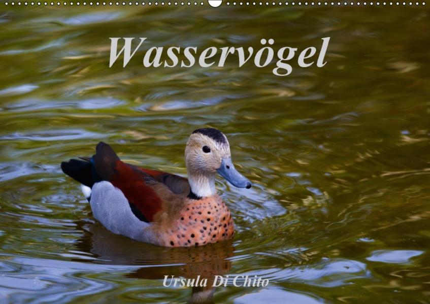 Wasservögel (Wandkalender 2017 DIN A2 quer) - Coverbild