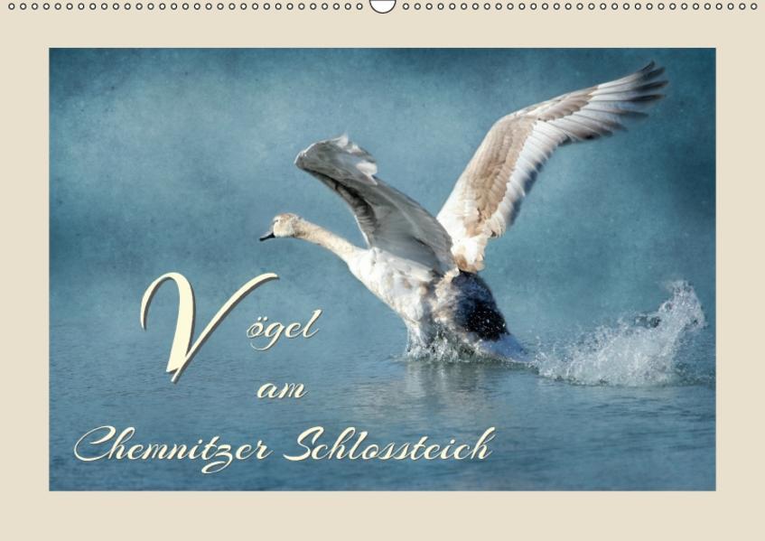 Vögel am Chemnitzer Schlossteich (Wandkalender 2017 DIN A2 quer) - Coverbild