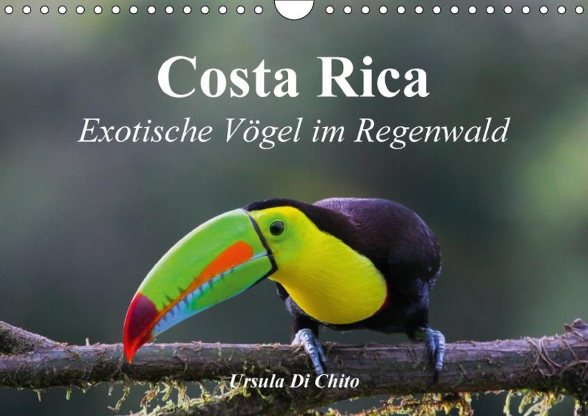 Costa Rica - Exotische Vögel im Regenwald (Wandkalender 2017 DIN A4 quer) - Coverbild
