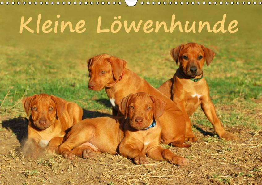 Kleine LöwenhundeAT-Version  (Wandkalender 2017 DIN A3 quer) - Coverbild