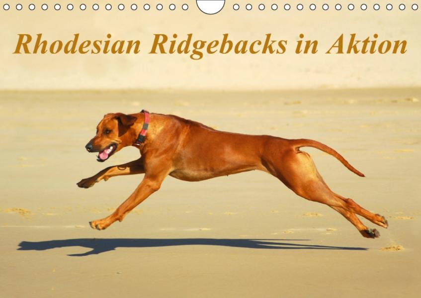 Rhodesian Ridgebacks in AktionAT-Version  (Wandkalender 2017 DIN A4 quer) - Coverbild