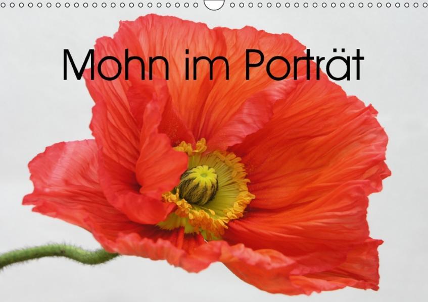 Mohn im Porträt (Wandkalender 2017 DIN A3 quer) - Coverbild
